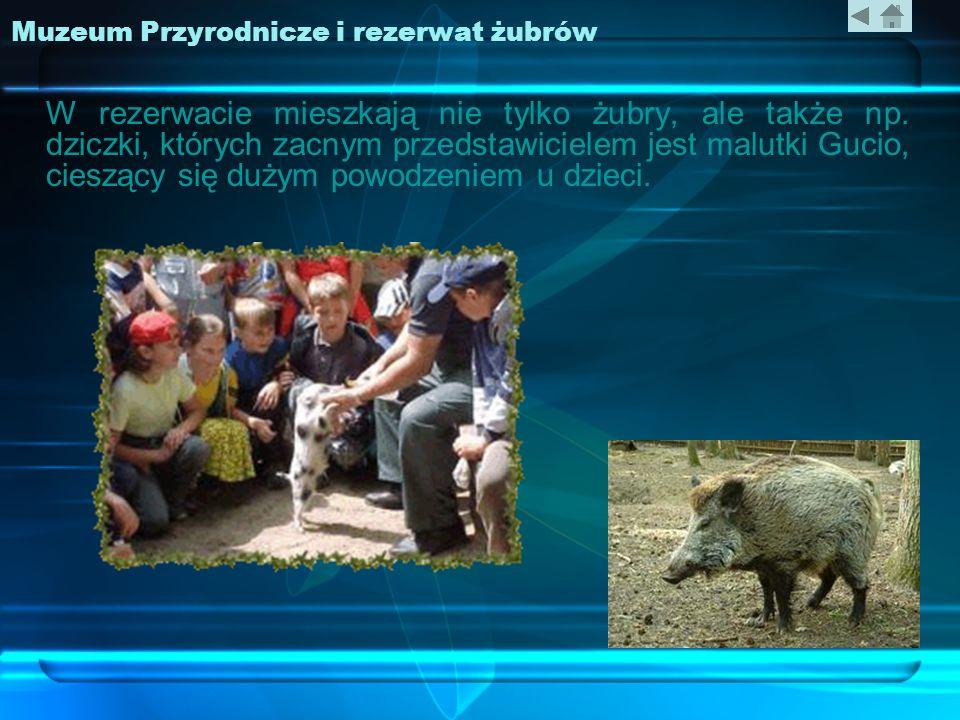 Muzeum Przyrodnicze i rezerwat żubrów W rezerwacie mieszkają nie tylko żubry, ale także np. dziczki, których zacnym przedstawicielem jest malutki Guci