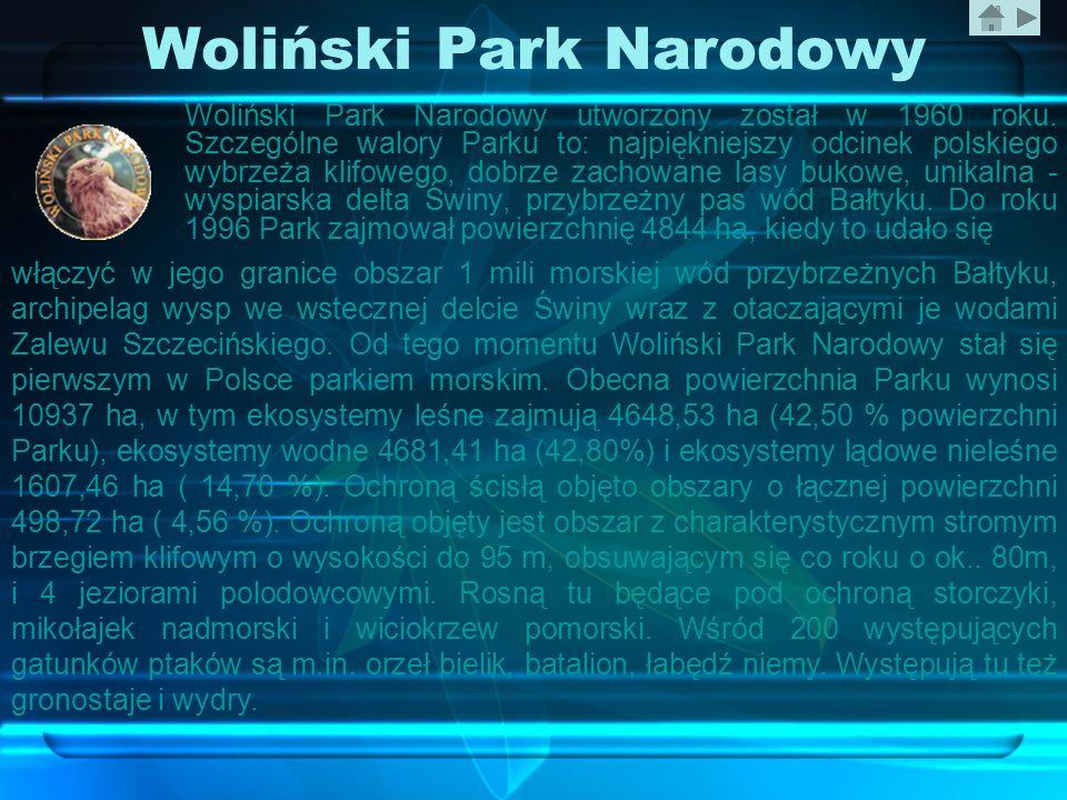 Woliński Park Narodowy Woliński Park Narodowy utworzony został w 1960 roku. Szczególne walory Parku to: najpiękniejszy odcinek polskiego wybrzeża klif