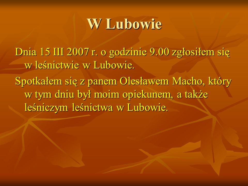 W Lubowie Dnia 15 III 2007 r. o godzinie 9.00 zgłosiłem się w leśnictwie w Lubowie.