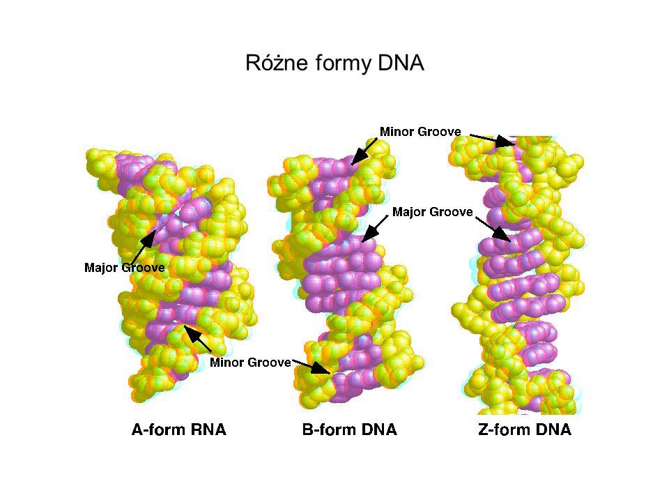 Różne formy DNA