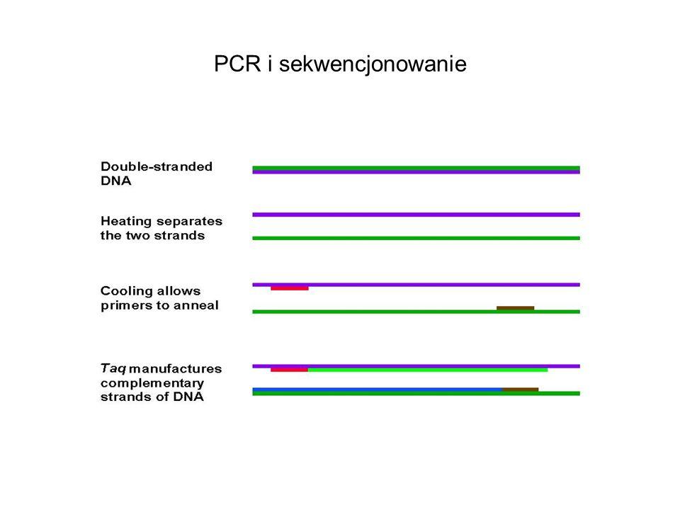 PCR i sekwencjonowanie