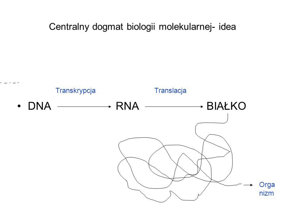 Centralny dogmat biologii molekularnej- idea DNA RNA BIAŁKO TranskrypcjaTranslacja Orga nizm