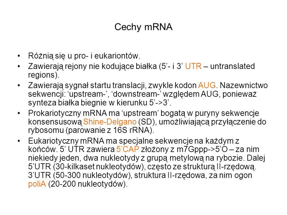 Cechy mRNA Różnią się u pro- i eukariontów. Zawierają rejony nie kodujące białka (5- i 3 UTR – untranslated regions). Zawierają sygnał startu translac