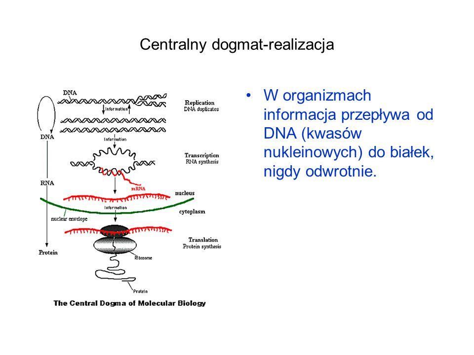 Centralny dogmat-realizacja W organizmach informacja przepływa od DNA (kwasów nukleinowych) do białek, nigdy odwrotnie.