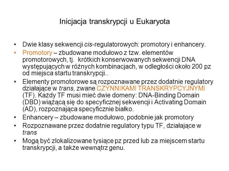 Inicjacja transkrypcji u Eukaryota Dwie klasy sekwencji cis-regulatorowych: promotory i enhancery. Promotory – zbudowane modułowo z tzw. elementów pro