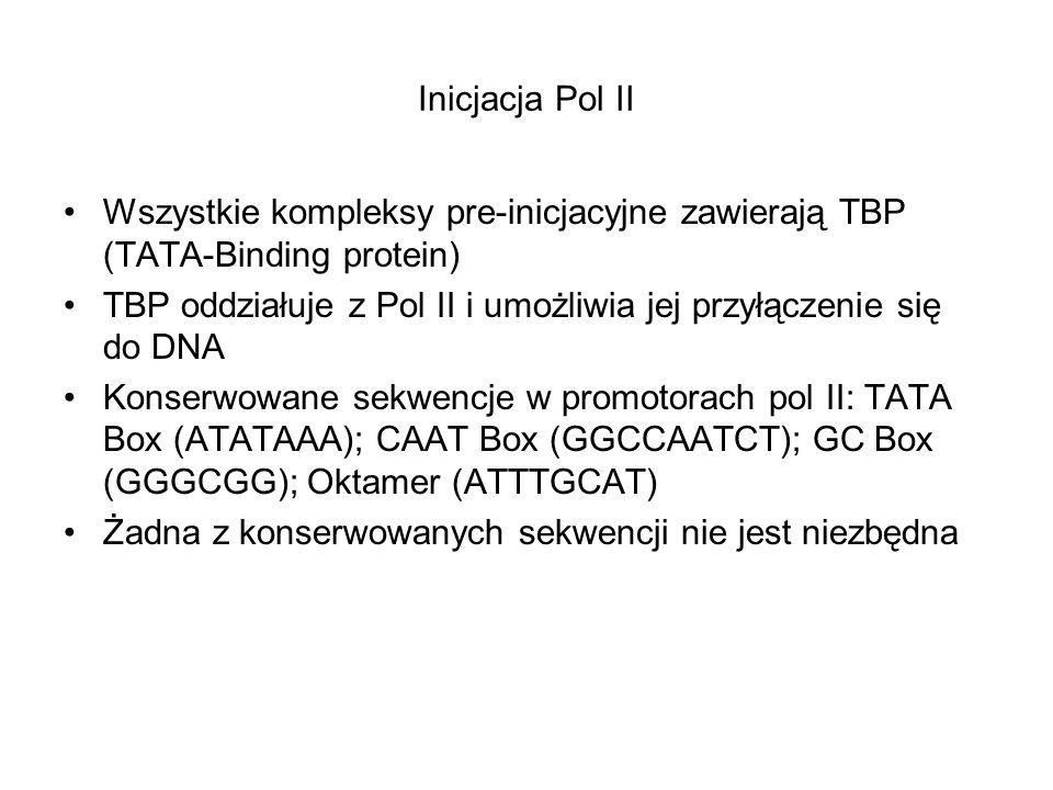 Inicjacja Pol II Wszystkie kompleksy pre-inicjacyjne zawierają TBP (TATA-Binding protein) TBP oddziałuje z Pol II i umożliwia jej przyłączenie się do