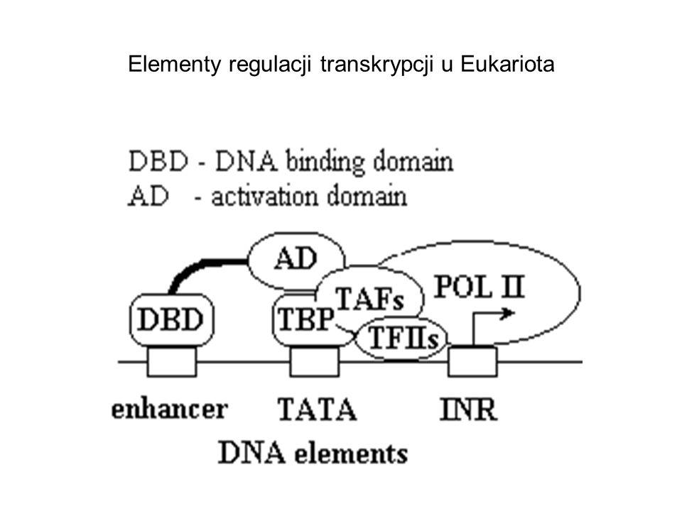 Elementy regulacji transkrypcji u Eukariota