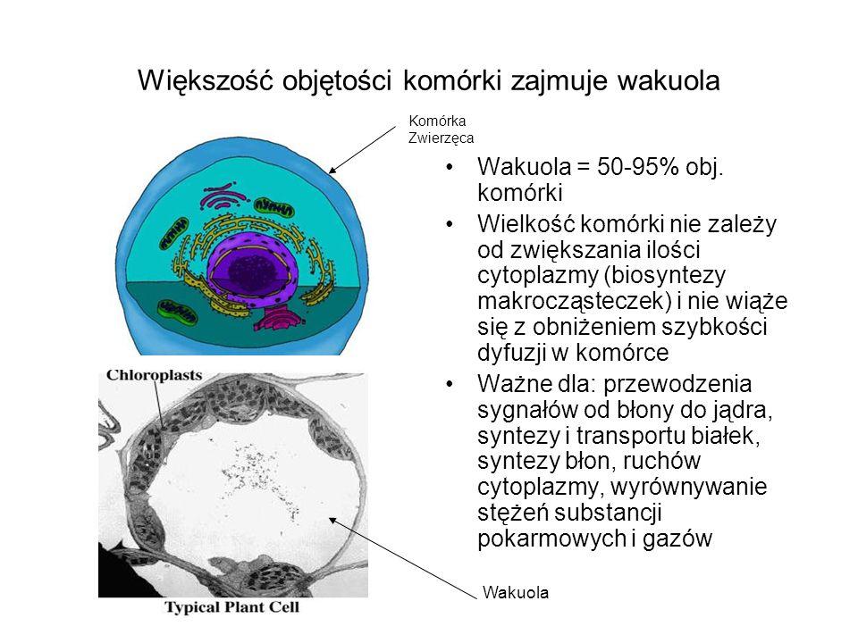 Większość objętości komórki zajmuje wakuola Wakuola = 50-95% obj. komórki Wielkość komórki nie zależy od zwiększania ilości cytoplazmy (biosyntezy mak