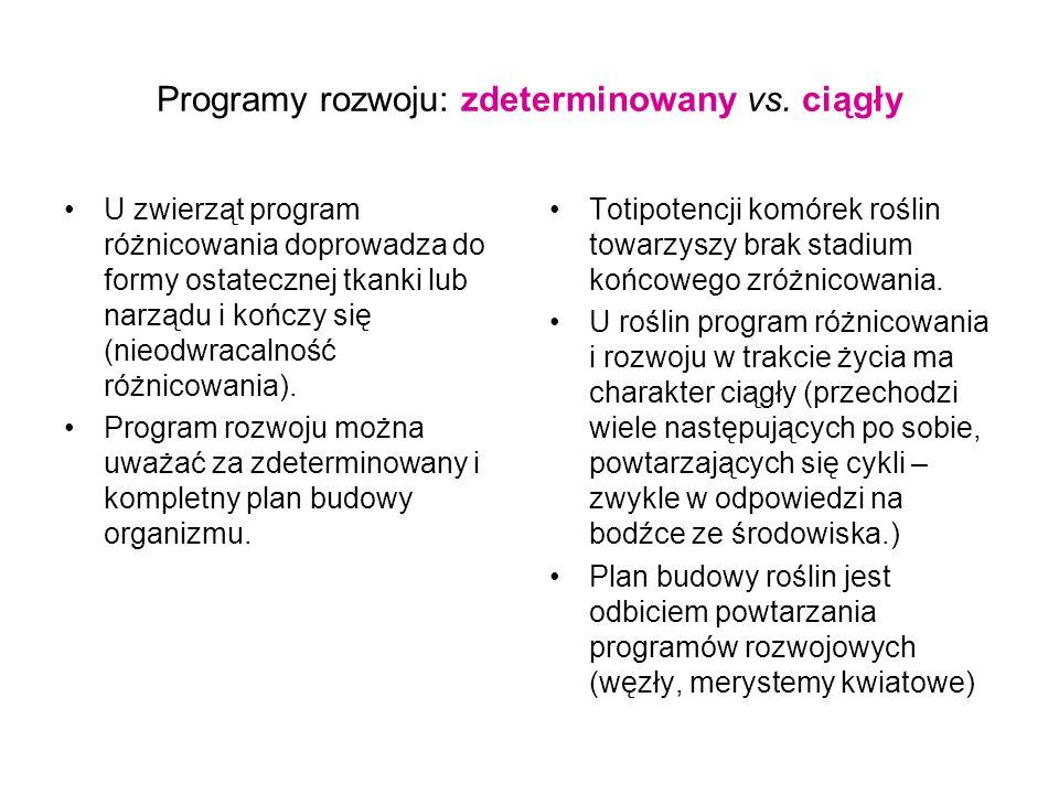 Programy rozwoju: zdeterminowany vs. ciągły U zwierząt program różnicowania doprowadza do formy ostatecznej tkanki lub narządu i kończy się (nieodwrac
