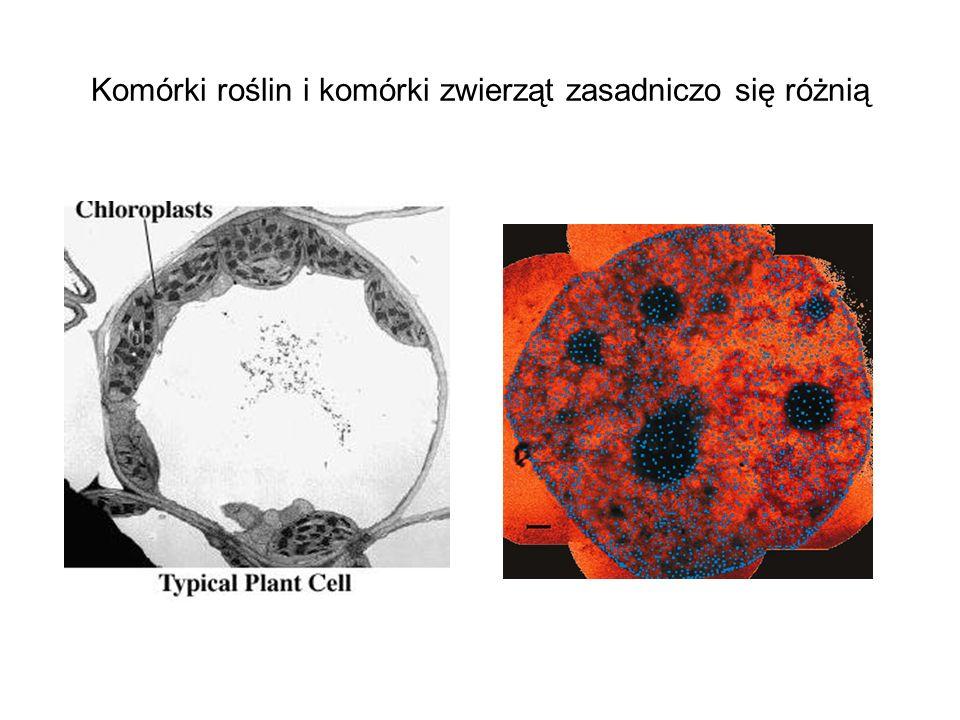 Komórki roślin i komórki zwierząt zasadniczo się różnią