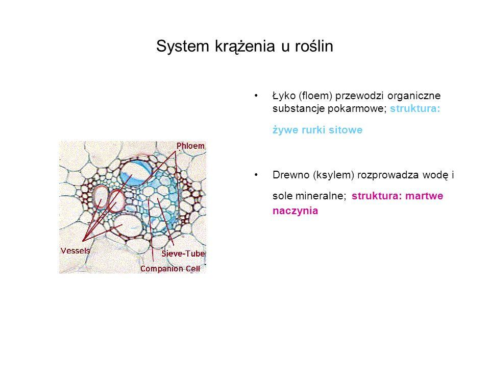 System krążenia u roślin Łyko (floem) przewodzi organiczne substancje pokarmowe; struktura: żywe rurki sitowe Drewno (ksylem) rozprowadza wodę i sole