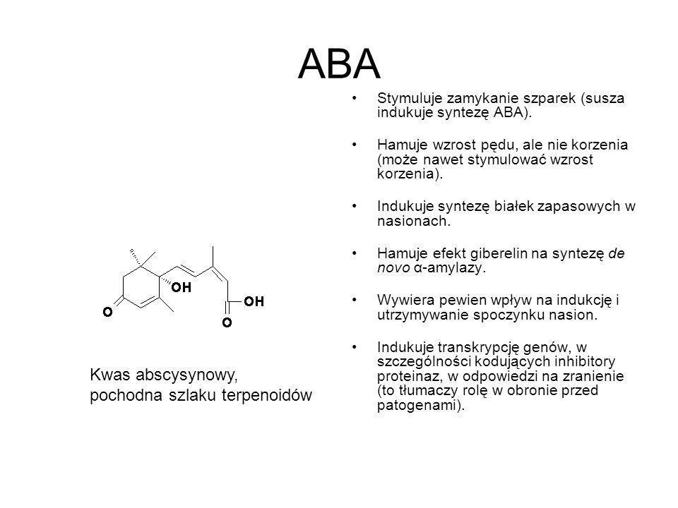ABA Stymuluje zamykanie szparek (susza indukuje syntezę ABA). Hamuje wzrost pędu, ale nie korzenia (może nawet stymulować wzrost korzenia). Indukuje s