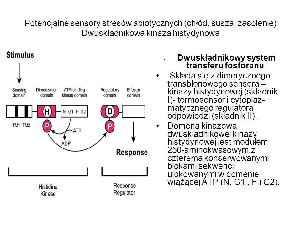 Potencjalne sensory stresów abiotycznych (chłód, susza, zasolenie) Dwuskładnikowa kinaza histydynowa Dwuskładnikowy system transferu fosforanu Składa