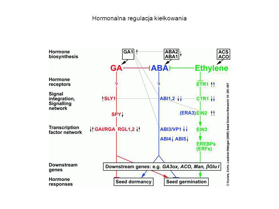 Hormonalna regulacja kiełkowania