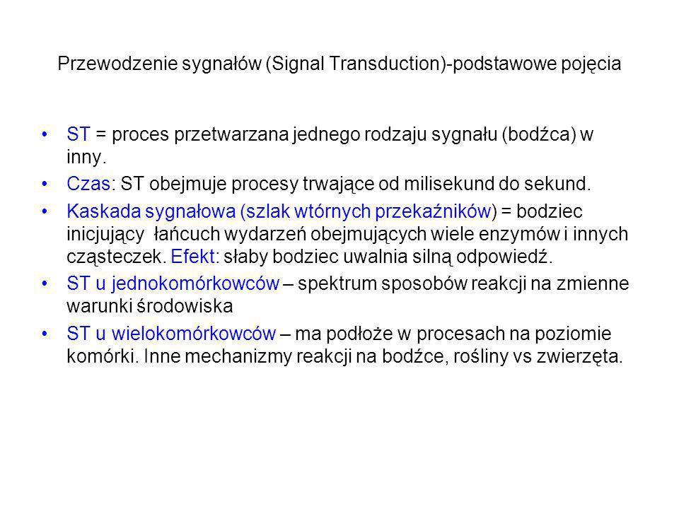 Przewodzenie sygnałów (Signal Transduction)-podstawowe pojęcia ST = proces przetwarzana jednego rodzaju sygnału (bodźca) w inny. Czas: ST obejmuje pro