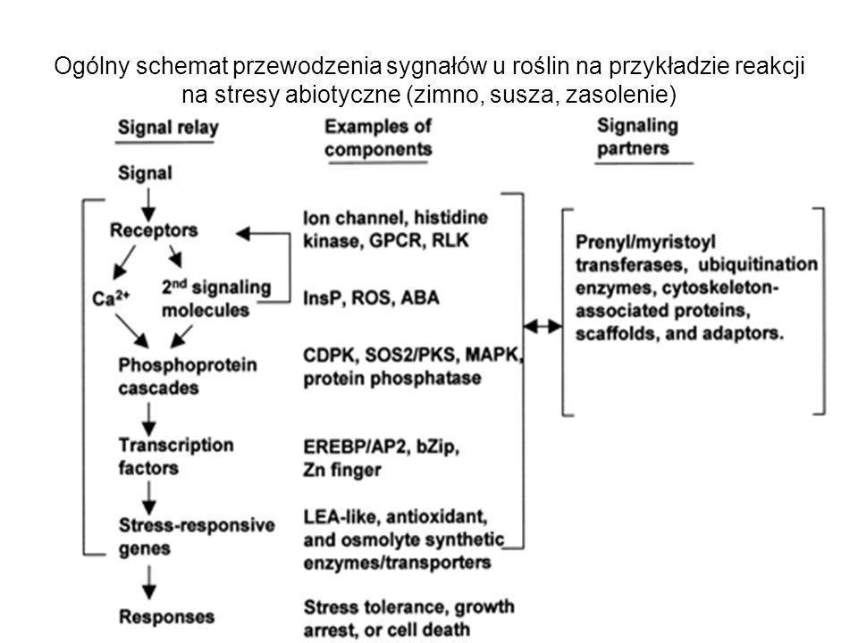 Ogólny schemat przewodzenia sygnałów u roślin na przykładzie reakcji na stresy abiotyczne (zimno, susza, zasolenie)