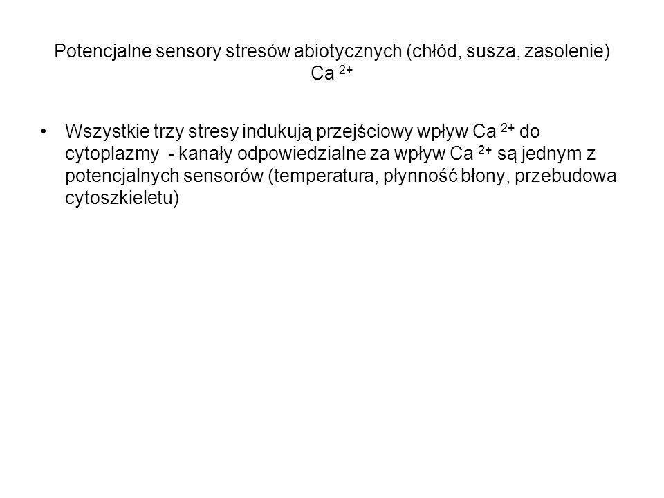 Potencjalne sensory stresów abiotycznych (chłód, susza, zasolenie) Ca 2+ Wszystkie trzy stresy indukują przejściowy wpływ Ca 2+ do cytoplazmy - kanały