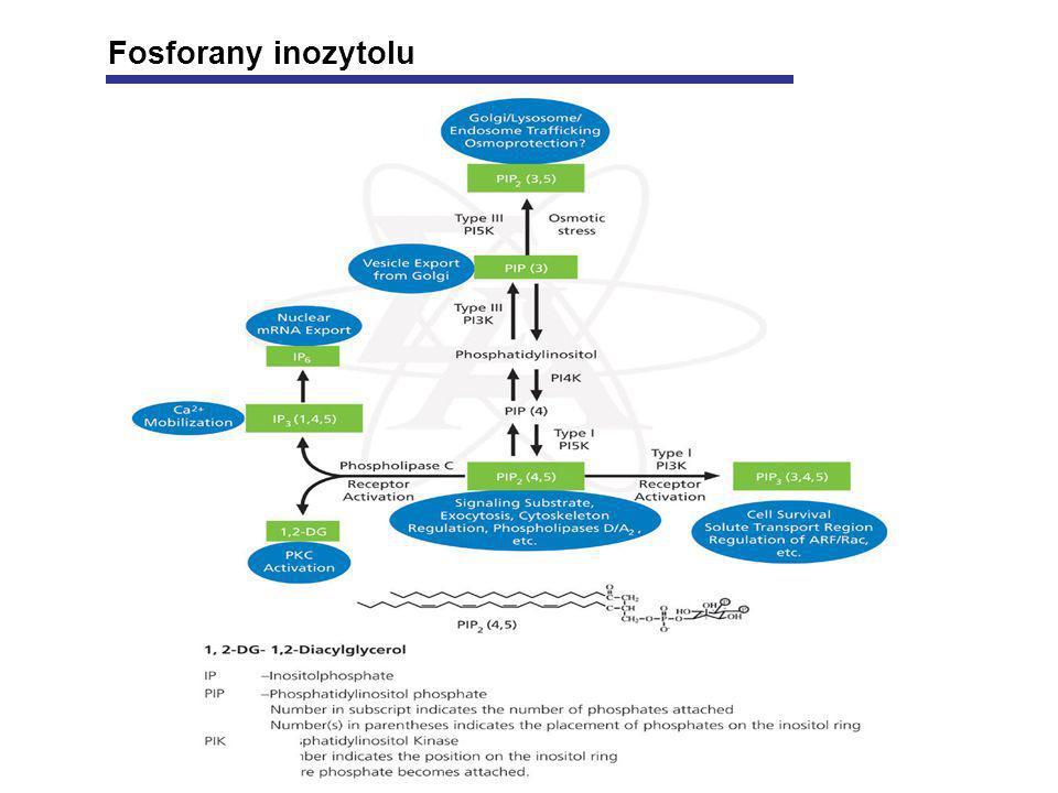 Fosforany inozytolu