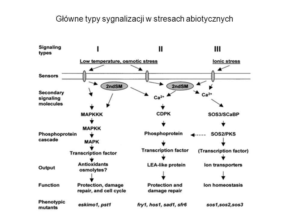 Główne typy sygnalizacji w stresach abiotycznych