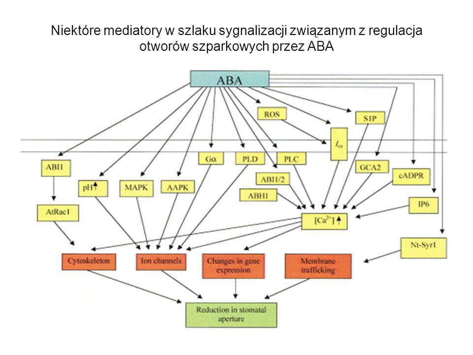 Niektóre mediatory w szlaku sygnalizacji związanym z regulacja otworów szparkowych przez ABA