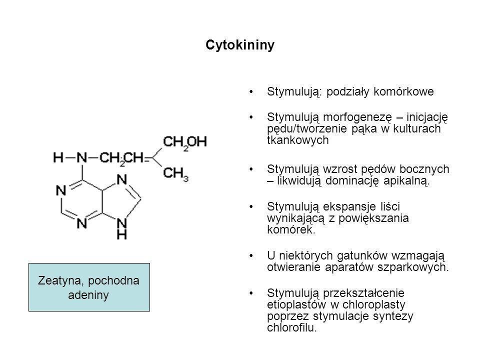 Cytokininy Stymulują: podziały komórkowe Stymulują morfogenezę – inicjację pędu/tworzenie pąka w kulturach tkankowych Stymulują wzrost pędów bocznych