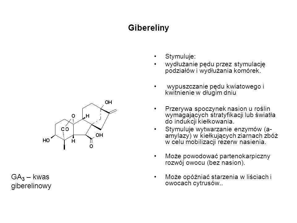 Gibereliny Stymuluje: wydłużanie pędu przez stymulację podziałów i wydłużania komórek. wypuszczanie pędu kwiatowego i kwitnienie w długim dniu Przeryw