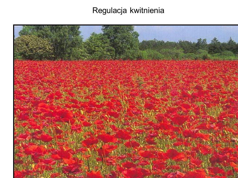 Rośliny kwiatowe przechodzą fazę wzrostu wegetatywnego (wytwarzanie pędów i liści) i fazę kwitnienia, w trakcie której wytwarzają organy służące do rozmnażania płciowego U roślin jednorocznych faza wegetatywna zaczyna się w momencie kiełkowania nasion.