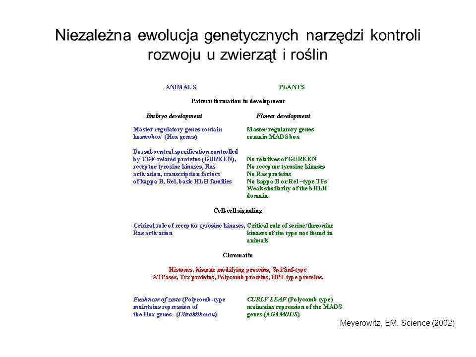 Niezależna ewolucja genetycznych narzędzi kontroli rozwoju u zwierząt i roślin Meyerowitz, EM. Science (2002)