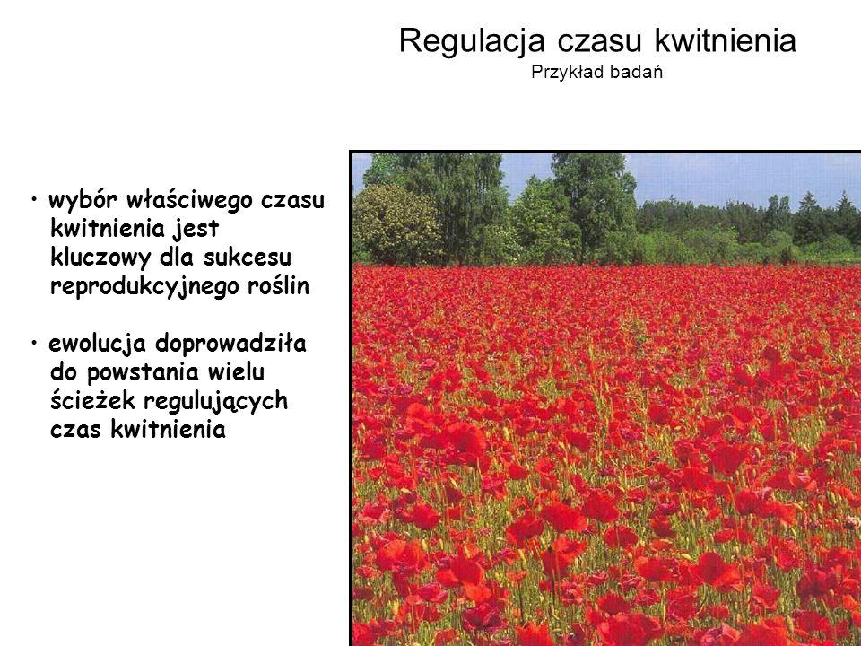 wybór właściwego czasu kwitnienia jest kluczowy dla sukcesu reprodukcyjnego roślin ewolucja doprowadziła do powstania wielu ścieżek regulujących czas