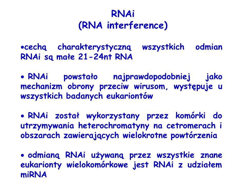RNAi (RNA interference) cechą charakterystyczną wszystkich odmian RNAi są małe 21-24nt RNA RNAi powstało najprawdopodobniej jako mechanizm obrony prze