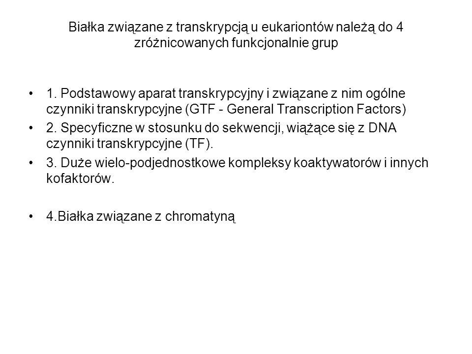 Białka związane z transkrypcją u eukariontów należą do 4 zróżnicowanych funkcjonalnie grup 1. Podstawowy aparat transkrypcyjny i związane z nim ogólne