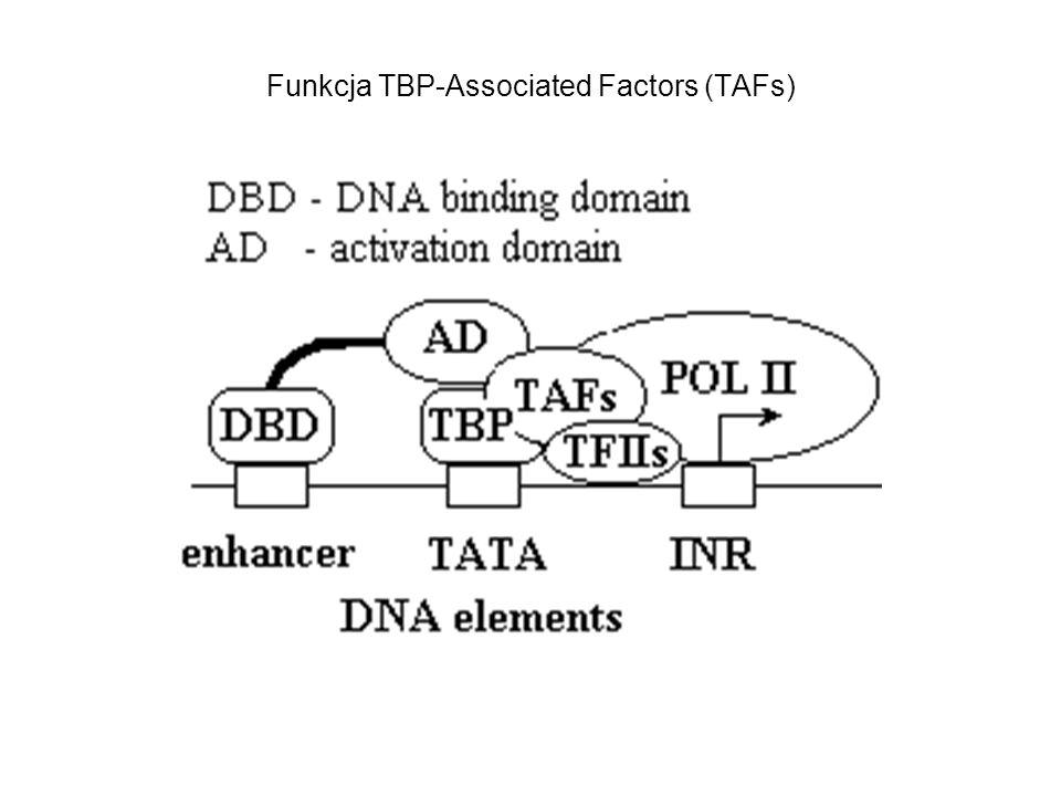 Funkcja TBP-Associated Factors (TAFs)