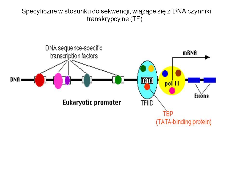Specyficzne w stosunku do sekwencji, wiążące się z DNA czynniki transkrypcyjne (TF).