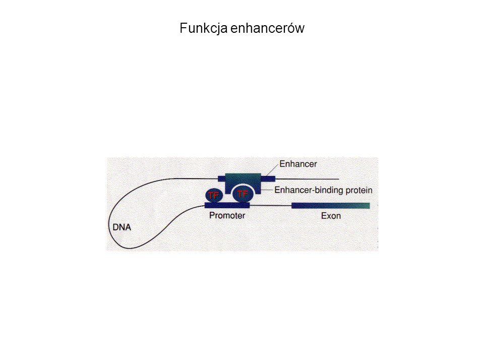 Funkcja enhancerów