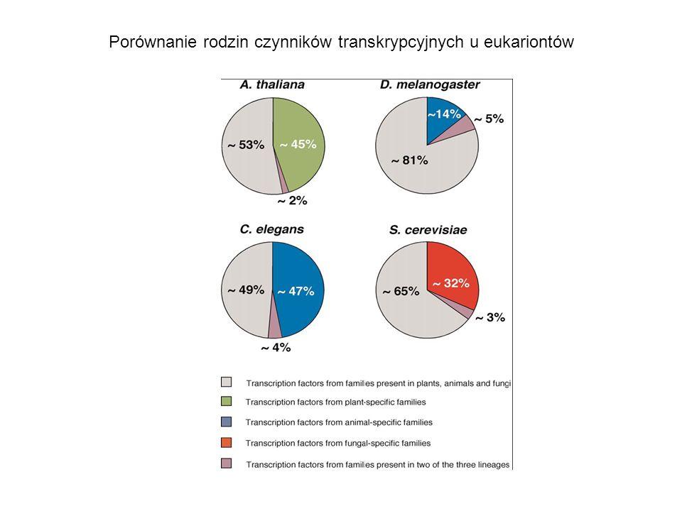 Porównanie rodzin czynników transkrypcyjnych u eukariontów
