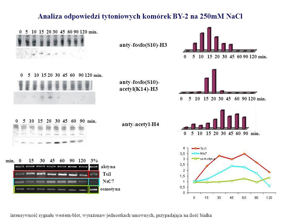 min. 0 15 30 45 60 90 120 3% aktyna Tsi1 NtC7 osmotyna Analiza odpowiedzi tytoniowych komórek BY-2 na 250mM NaCl anty-fosfo(S10)-H3 anty-fosfo(S10)- a
