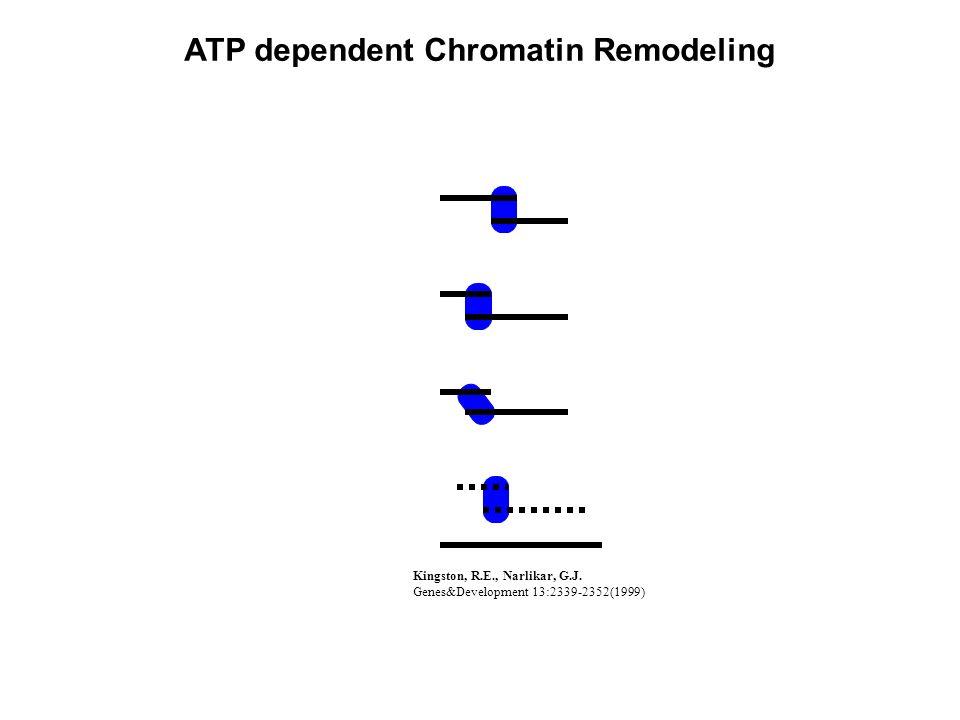 Kingston, R.E., Narlikar, G.J. Genes&Development 13:2339-2352(1999) ATP dependent Chromatin Remodeling