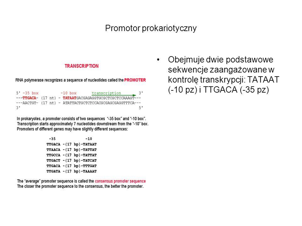 Promotor prokariotyczny Obejmuje dwie podstawowe sekwencje zaangażowane w kontrolę transkrypcji: TATAAT (-10 pz) i TTGACA (-35 pz)