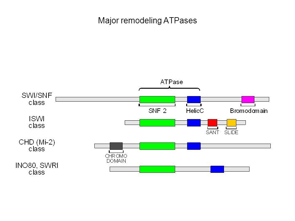 Major remodeling ATPases