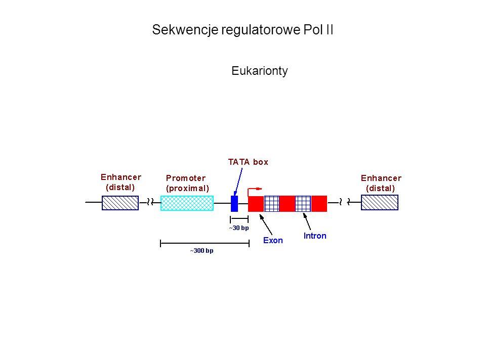Sekwencje regulatorowe Pol II Eukarionty