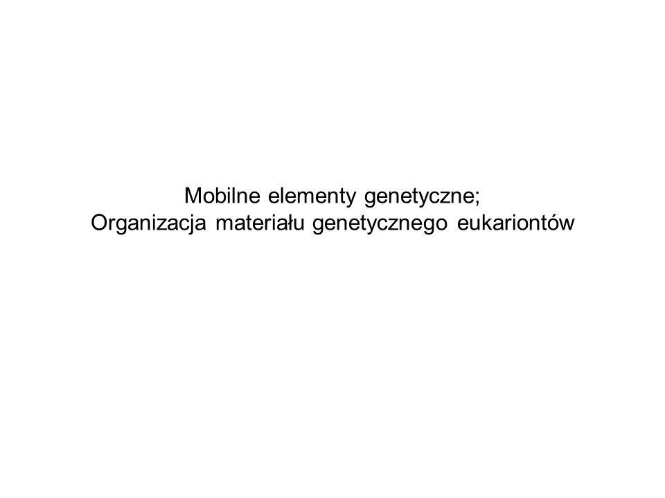 Chromatyna – hierarchia struktur