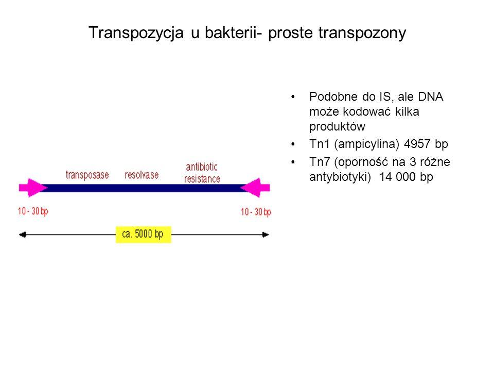 Transpozycja u bakterii – złożone transpozony Przykład ewolucji w stronę wzrostu złożoności: Synchronizacja dwóch elementów IS w celu przeniesienia sekwencji znajdującej się pomiędzy nimi.