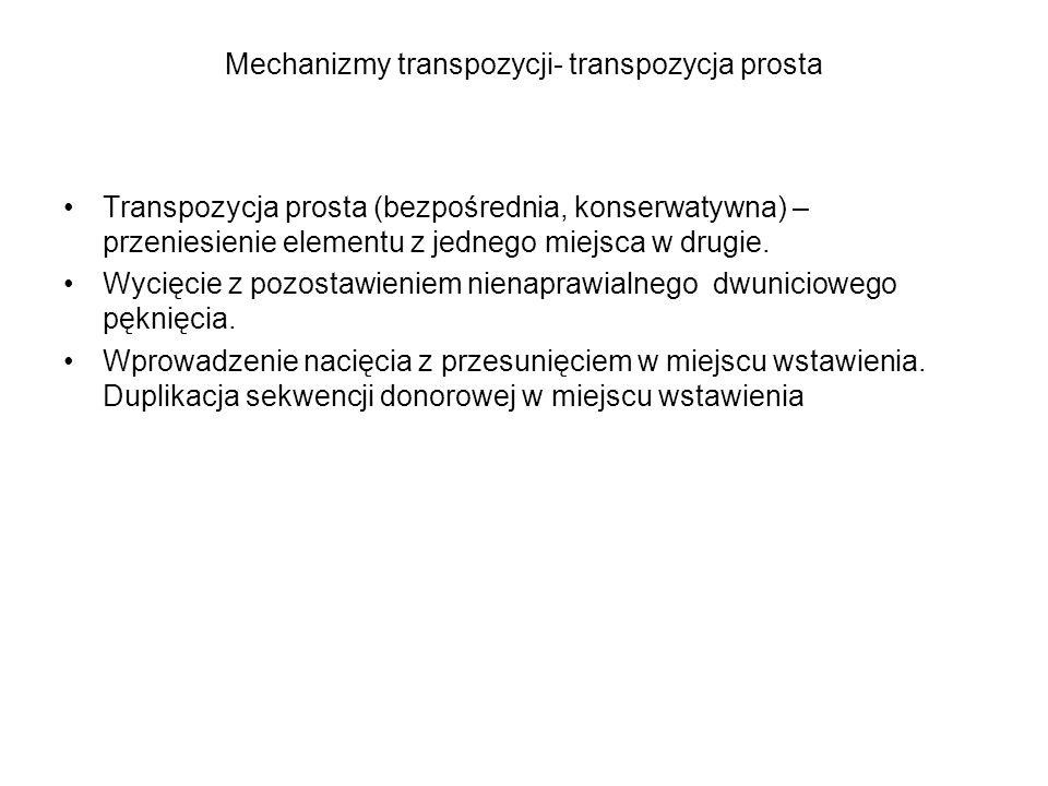 Mechanizmy transpozycji- transpozycja z replikacją Replikacja transpozonu Nacięcie z przesunięciem po obu stronach zreplikowanego transpozonu i w sekwencji donorowej.