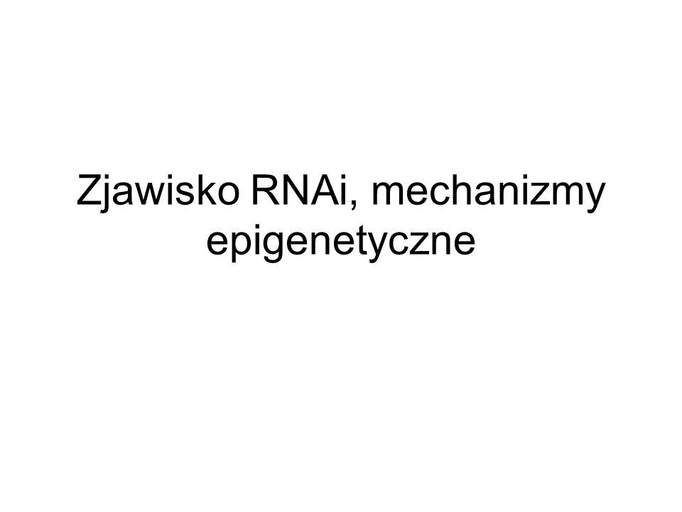 Zjawisko RNAi, mechanizmy epigenetyczne