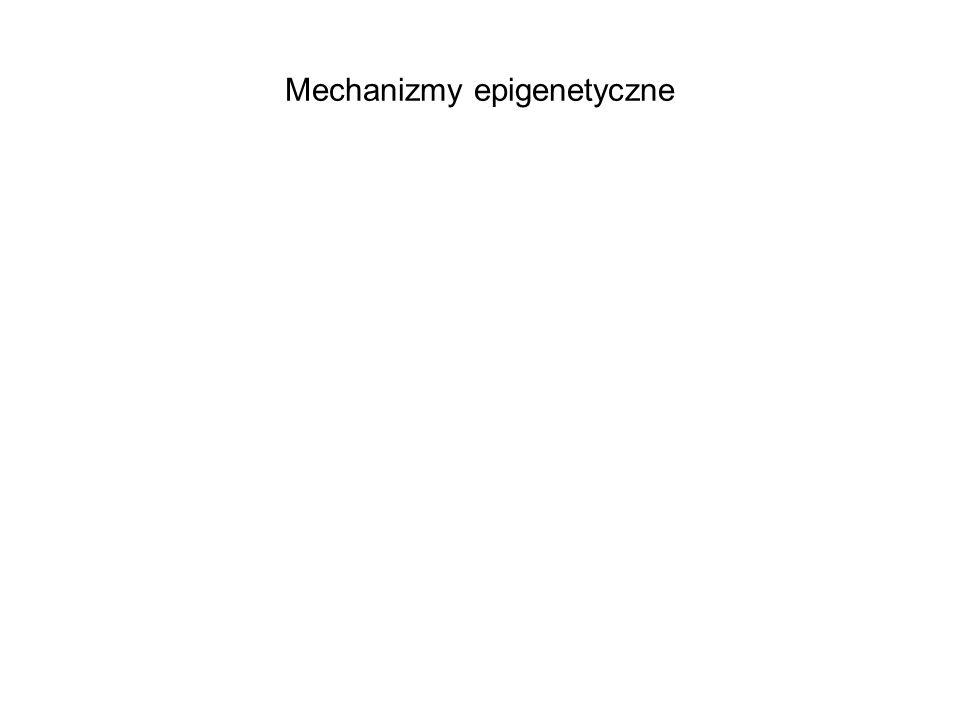 Mechanizmy epigenetyczne