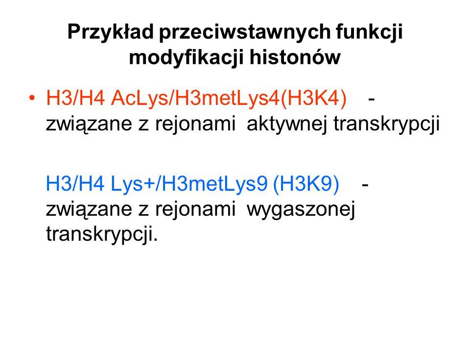 Przykład przeciwstawnych funkcji modyfikacji histonów H3/H4 AcLys/H3metLys4(H3K4) - związane z rejonami aktywnej transkrypcji H3/H4 Lys+/H3metLys9 (H3