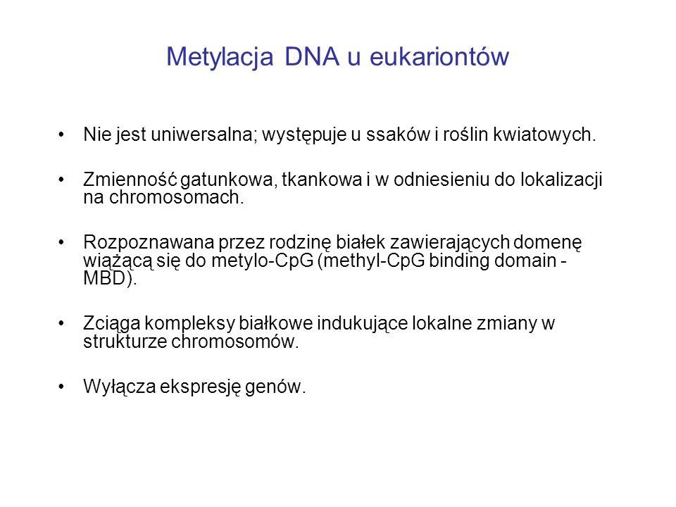 Metylacja DNA u eukariontów Nie jest uniwersalna; występuje u ssaków i roślin kwiatowych. Zmienność gatunkowa, tkankowa i w odniesieniu do lokalizacji