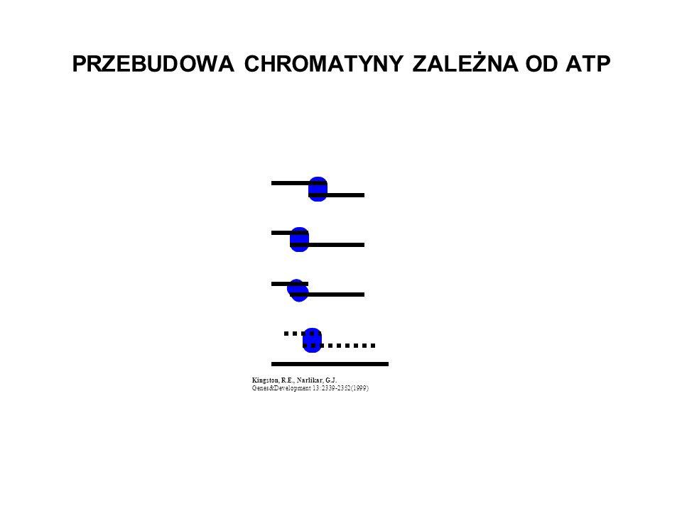 Kingston, R.E., Narlikar, G.J. Genes&Development 13:2339-2352(1999) PRZEBUDOWA CHROMATYNY ZALEŻNA OD ATP