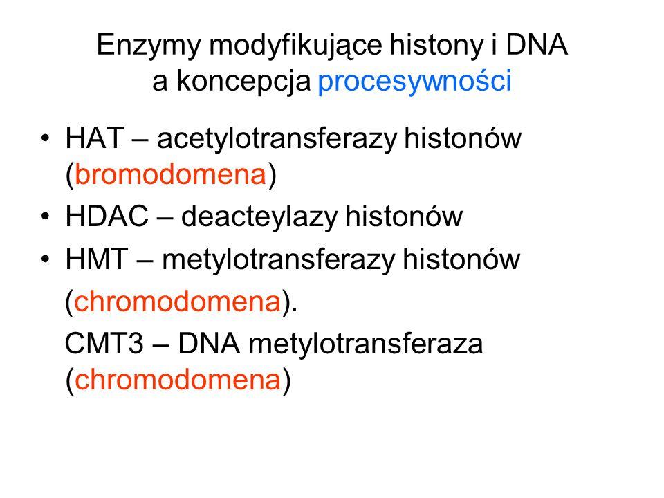 Enzymy modyfikujące histony i DNA a koncepcja procesywności HAT – acetylotransferazy histonów (bromodomena) HDAC – deacteylazy histonów HMT – metylotr