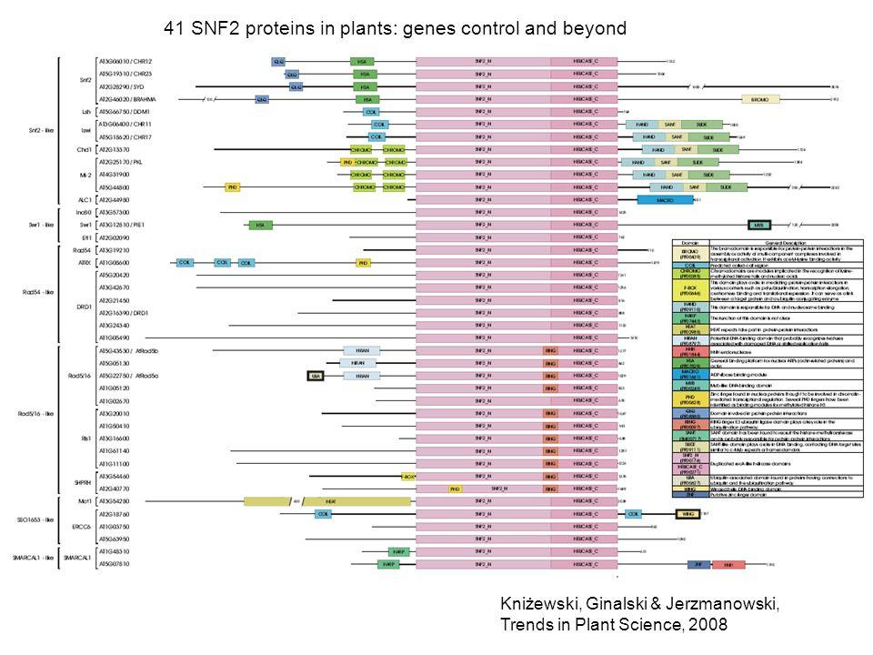 41 SNF2 proteins in plants: genes control and beyond Kniżewski, Ginalski & Jerzmanowski, Trends in Plant Science, 2008